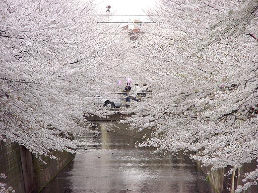 Nakameguro, Tokyo Guide - Airbnb Neighborhoods